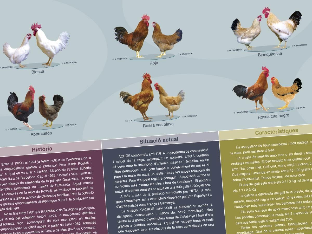 Disseny gràfic, fotografia i maquetació de catàleg Empordanesa
